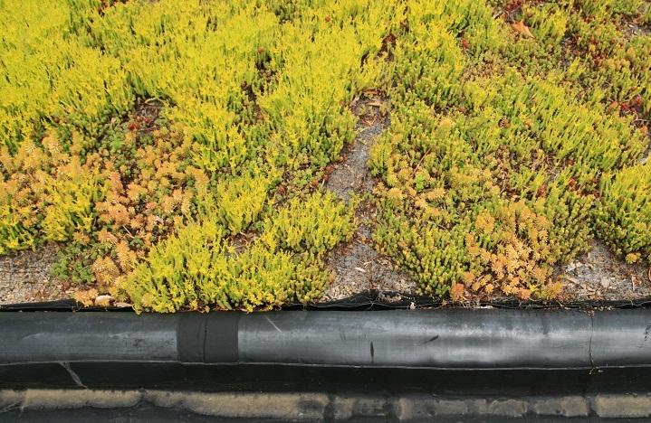 Green Sedum Roofing