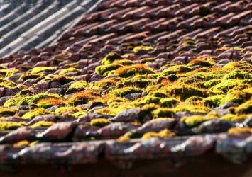 Moss on a pitched roof.