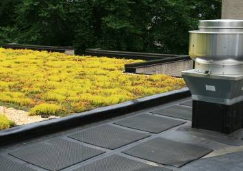 Sedum-green-roof
