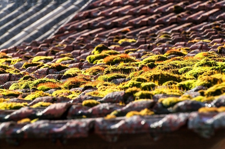 Best Ways To Remove Moss From Your Roof